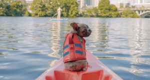 gilet de sauvetage chien veste orange disponible