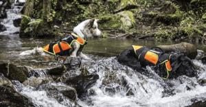 chiens eau rivière infos bandes produits